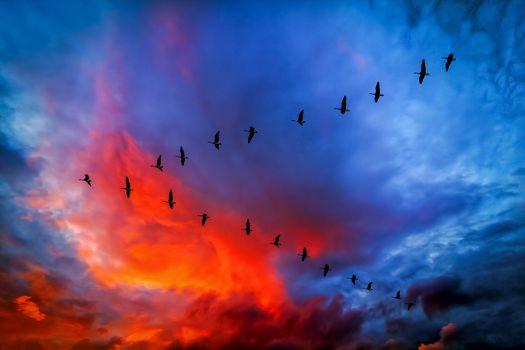 Photo free school, sky background, cranes