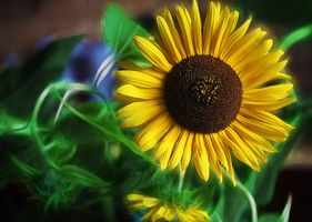 Фото бесплатно подсолнечника, флора, икебана