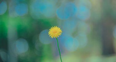 Бесплатные фото цветы,портрет,красивая,пейзаж,пастель,свежий,естественный