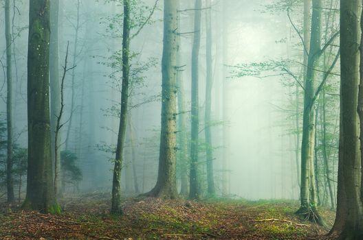 Фото бесплатно осень, ветви, старый лес