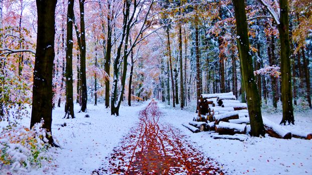 The first winter days in the woods - free photo