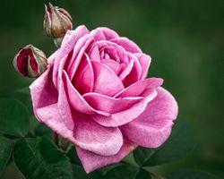 Мой любимый цветок · бесплатное фото