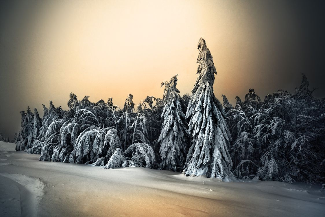 Снежная зима и елки · бесплатное фото