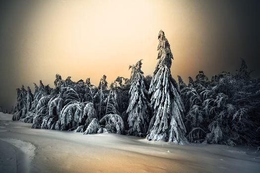 Снежная зима и елки