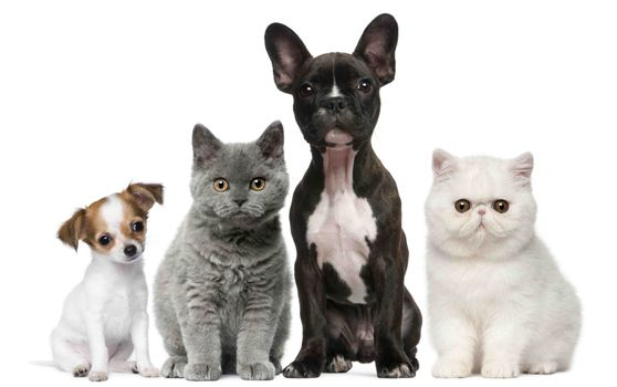 Cats and dogs on white background · free photo