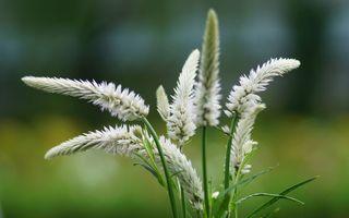 Фото бесплатно сад, дикий, макро