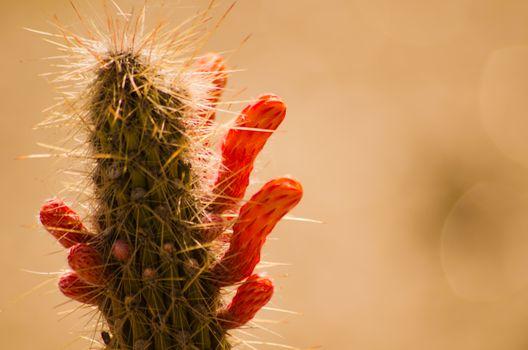 Фото бесплатно кактус, спокойствие, пустыня