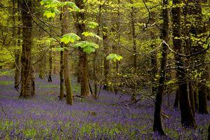 Клен в лесу · бесплатное фото