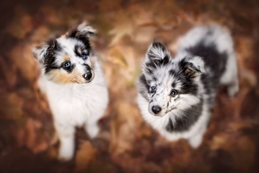 Two spotted puppy · free photo