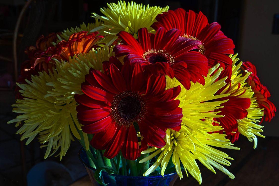 Фото бесплатно цветы, букет, герберы, астры, флора, цветочная композиция, цветы