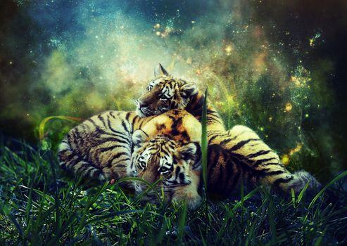Фото бесплатно тигрята, малыши, трава