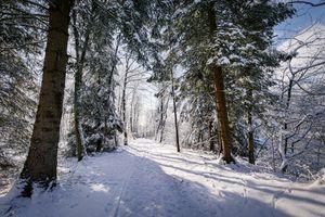Фото бесплатно зима, дорога, лес