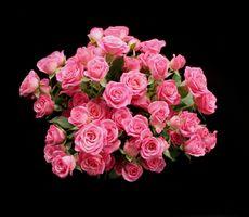 Бесплатные фото цветы,букет,розы,чёрный фон,флора