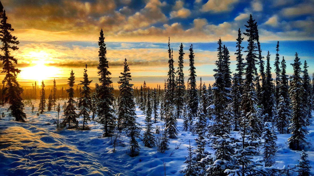 Фото бесплатно Фэрбенкс, восход, закат, Аляска, зима, снег, деревья, природа, пейзаж, пейзажи