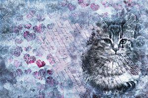 Фото бесплатно фон, текстура, кошка, кот, надписи, сердечки, art