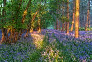 Сосновый лес · бесплатное фото