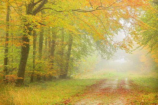 Старая лесная дорога осенью · бесплатное фото