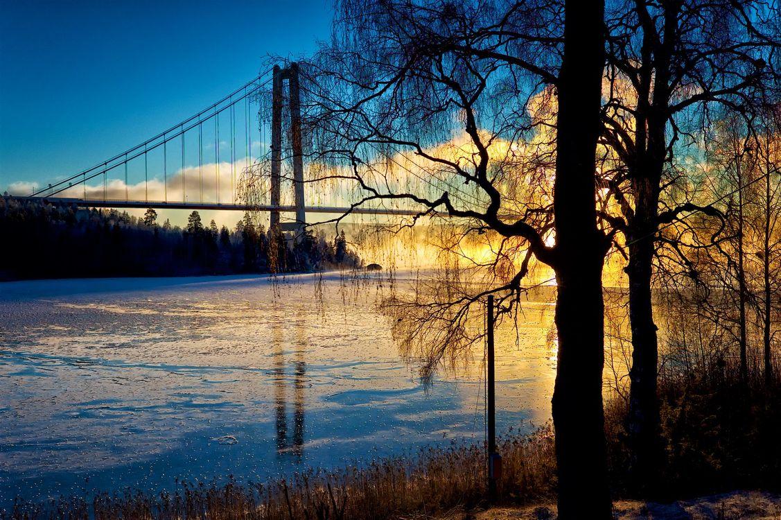 Фото бесплатно деревья, Швеция, природа - на рабочий стол
