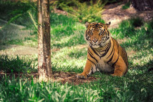 Фото бесплатно Взятые в Сан-Диего Сафари-парк, тигр, лицо