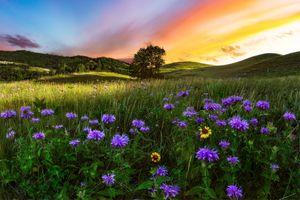 Бесплатные фото закат солнца,поле,цветы,дерево,холмы,природа,пейзаж