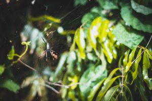 Photo free bokeh, web, plants