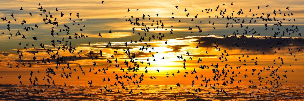 Photo free sunset, birds, fly