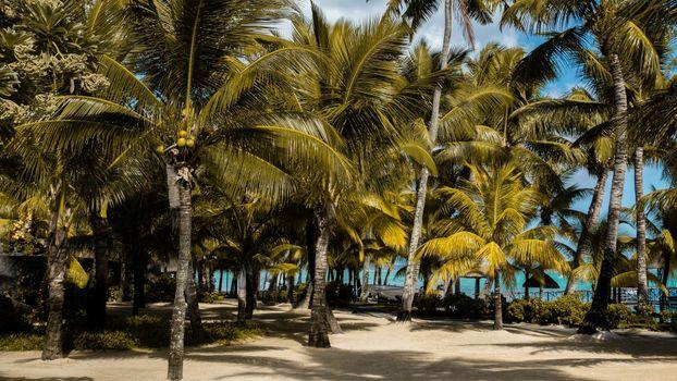 Photo free Mauritius, island, Africa