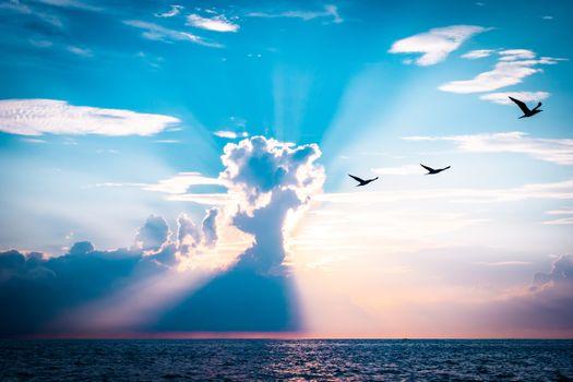 Фото бесплатно туча, море, птицы