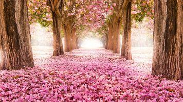 Бесплатные фото весенняя тропа,весна,деревья,парк