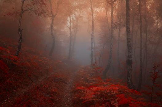 Осенний туман и папоротник у лесной дороги