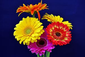 Photo free Gerbera Flowers, gerbera, flowers
