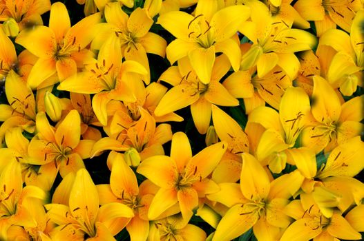 Фото бесплатно флора, желтый букет, цветок