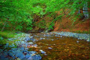 Фото бесплатно волшебная река, деревья, камни