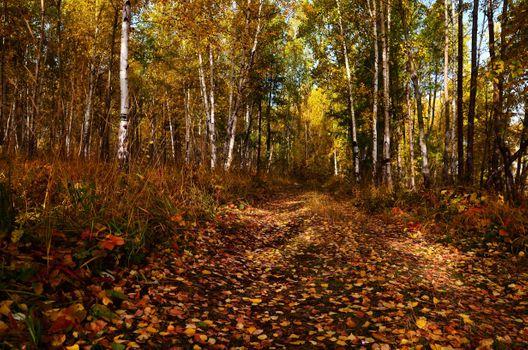 Заставки осень, старая лесная дорога, лес