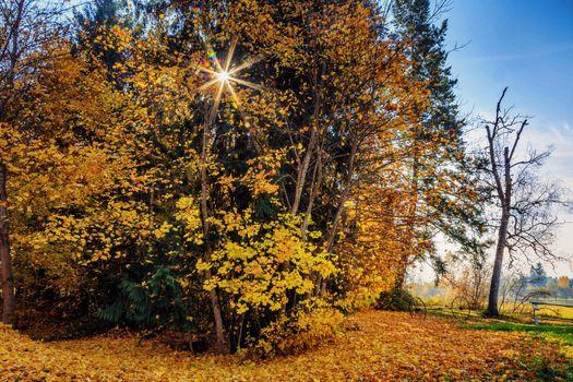 Заставки осень, парк, деревья, осенние листья, осенние краски, природа, пейзаж