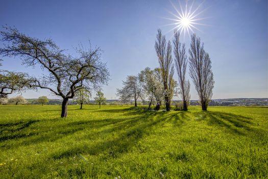 Фото бесплатно утро, поле, деревья