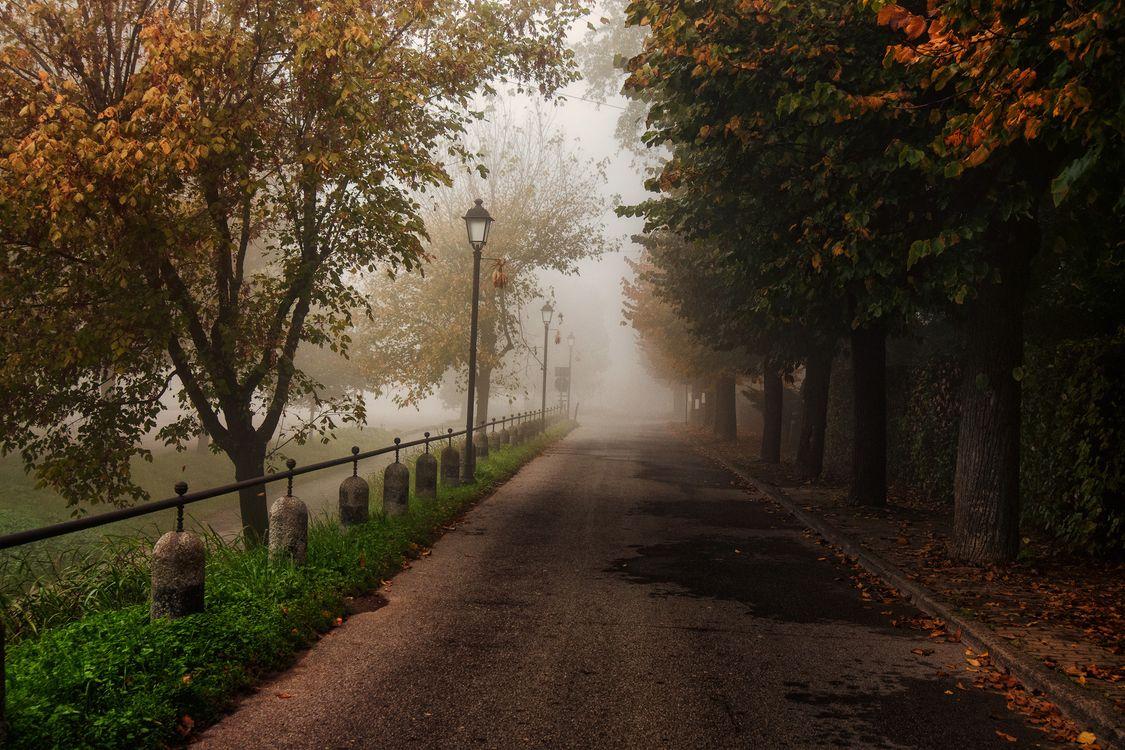 Фото бесплатно осень, забор, листва - на рабочий стол