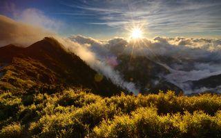 Photo free forest, trees, sunrise