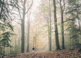 Фото бесплатно дерево, лес, туман