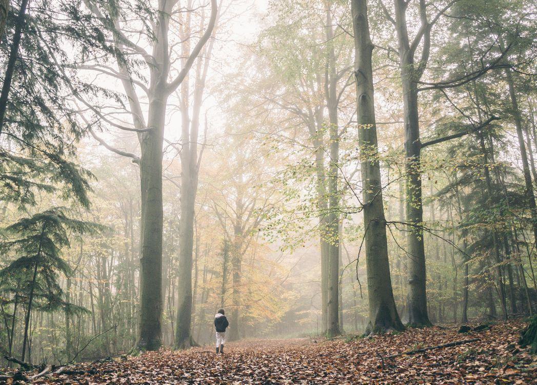 Фото дерево лес туман - бесплатные картинки на Fonwall