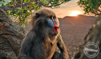 Заставки Король лев, Рафики, обезьяна, дерево, мудрость, персонаж