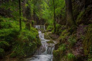Заставки лес,деревья,мох,лето,старый лес,зелень,речка