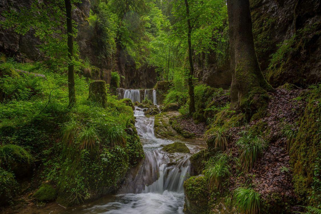 Free photo summer, Creek, river - to desktop