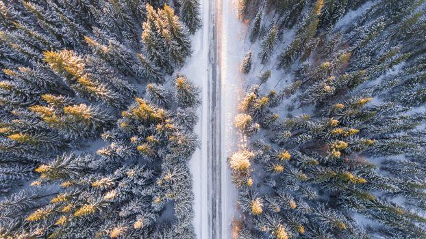 Photo free trees, snow, aerial view