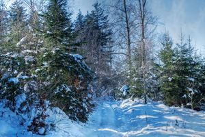 Бесплатные фото зима,лес,снег,деревья,сугробы,дорога,следы