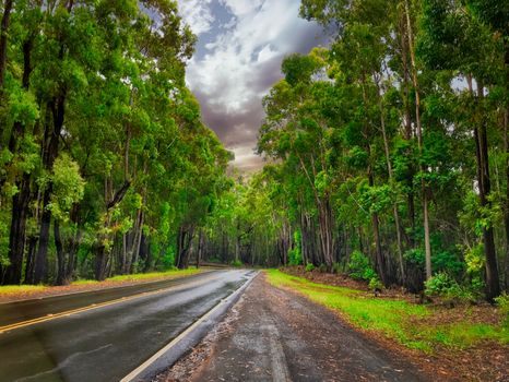 Photo free trees, road, wet asphalt