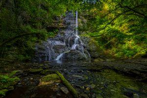 Бесплатные фото лес,речка,деревья,камни,ручей,течение,природа