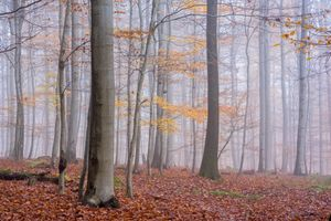 Заставки туман, лес, осенние листья