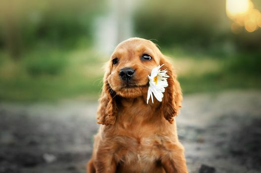 Puppy with chamomile · free photo