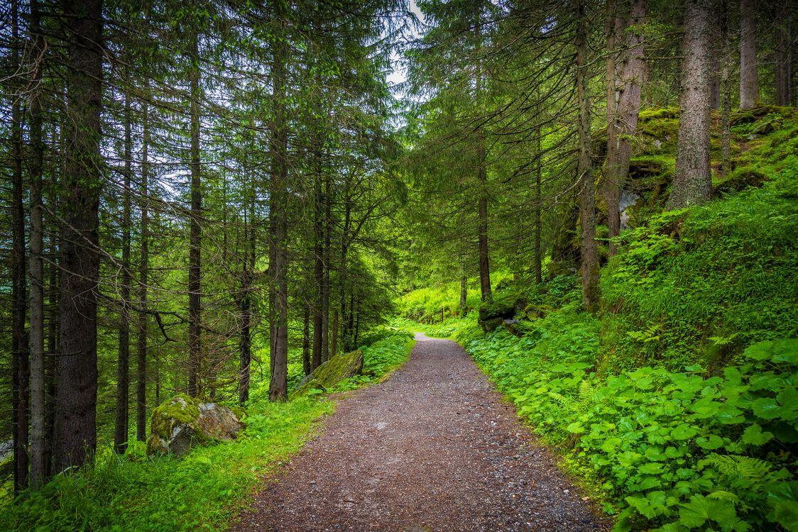 Фото бесплатно Бад-Гаштайн, тропа среди деревьев, Австрия, Bad Gastein, лес, дорога, деревья, пейзаж, пейзажи